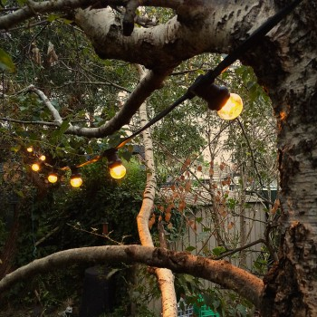 24Volt-LED-party-lights-from-trees